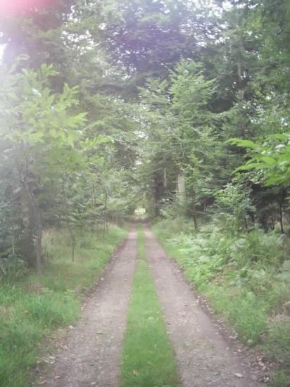 la grande allée bois de kerhir
